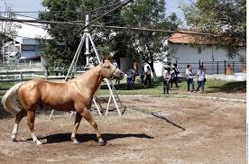 caballo Rancho los tres Potrillos